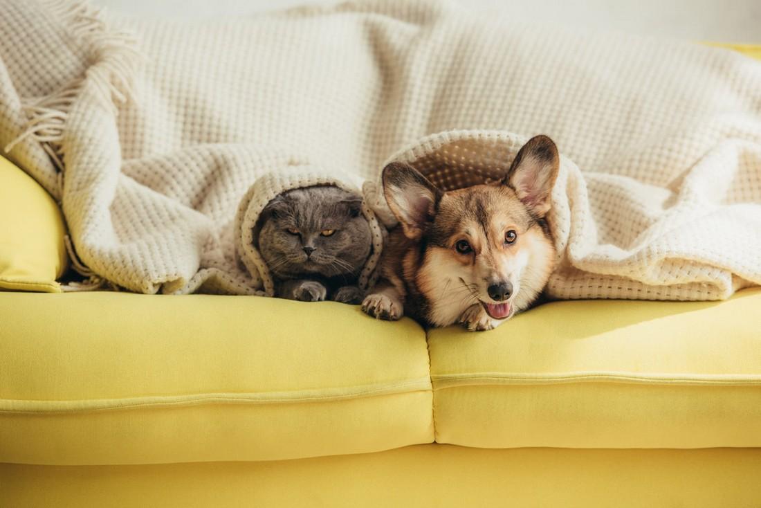 Как ухаживать за диваном, если в доме есть животные